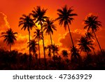 Coconut Palms On Sand Beach In...