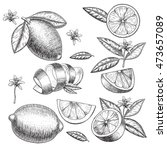 vector hand drawn lime or lemon ... | Shutterstock .eps vector #473657089