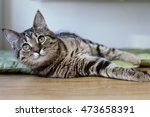 Stock photo funny cat is resting on the balcony on a sunny hot summer day sleepy cat young cat on the terrace 473658391