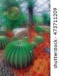 cactus in desert.domestic... | Shutterstock . vector #473711209