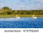 beautiful landscape photo of... | Shutterstock . vector #473796265