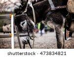 Small photo of agonize donkey