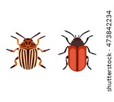 beetle bug insect isolated on... | Shutterstock .eps vector #473842234
