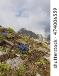 Small photo of Alpine gentian and the Whitewall mountain