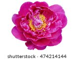 pink peony flower isolated on... | Shutterstock . vector #474214144