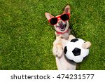 Soccer  Chihuahua Dog Holding A ...