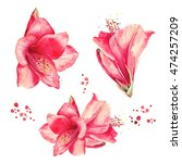 watercolor floral elements set. ... | Shutterstock . vector #474257209