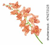 orchid watercolor. | Shutterstock . vector #474272125