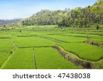 kind on rice terraces  bali ... | Shutterstock . vector #47438038