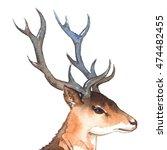 watercolor deer's head with... | Shutterstock . vector #474482455