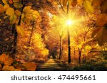 Gold Autumn Scenery In A Fores...