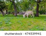 Cattle In A Beautiful Field...