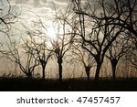 silhouette of bare trees at the ... | Shutterstock . vector #47457457