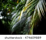 Shallow Depth Soft Focus Palm...