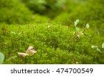 polytrichum mosses macro... | Shutterstock . vector #474700549