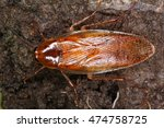 cockroaches everywhere in the... | Shutterstock . vector #474758725