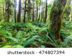 forest in olympic national park ... | Shutterstock . vector #474807394