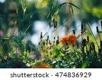 Garden Flowers. Flower Garden....