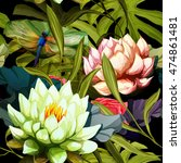 Water Lily  Lotus Flowers And...