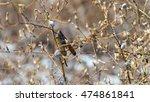 locust | Shutterstock . vector #474861841