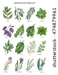 watercolor herbs collection in... | Shutterstock . vector #474879961