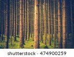 Pine Trees Forest Pattern....