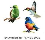 wild exotic bird on branch on... | Shutterstock . vector #474921931