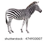 Stock photo young male zebra isolated on white background 474933007