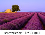 lavender field at sunset in... | Shutterstock . vector #475044811