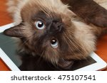 Stock photo balinese cat lying on the tablet computer 475107541