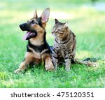 Stock photo cute dog and cat on green grass 475120351