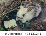 Adorable Rabbit Pet With Soft...