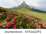 Small photo of Magnificent scenery of Dolomiti on a cloudy summer day with rocky peaks in background, Alpine Azalea (Rhododendron) blossoms on grassy hills & a mountain highway at Pass Giau, Cortina d'Ampezzo, Italy