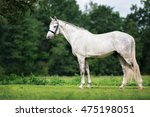 Beautiful Young Horse Standing