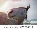 Smiling Horse In Sunlight....