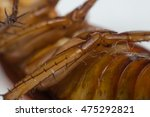 macro of cockroach insects of... | Shutterstock . vector #475292821