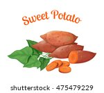 sweet potato. vector... | Shutterstock .eps vector #475479229