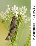 grasshopper | Shutterstock . vector #47549269