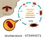life cycle of an american... | Shutterstock .eps vector #475494571
