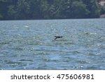 wild black bird | Shutterstock . vector #475606981