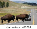 Two Bison Slowly Make Their Wa...