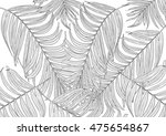 leaves of palm tree on white...   Shutterstock . vector #475654867