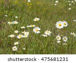 Nature Background  Flowers...