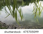 green lakeside