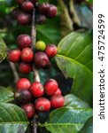 fresh coffee beans | Shutterstock . vector #475724599