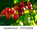 fresh coffee bean | Shutterstock . vector #475724605