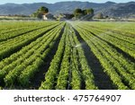 irrigation system on a basil... | Shutterstock . vector #475764907