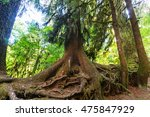 forest in olympic national park ... | Shutterstock . vector #475847929
