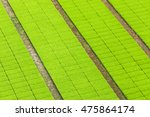 aerial view of paddy seedlings... | Shutterstock . vector #475864174