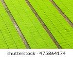 aerial view of paddy seedlings... | Shutterstock . vector #475864174
